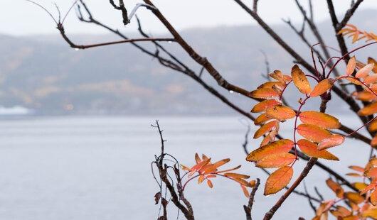 les details de l'automne