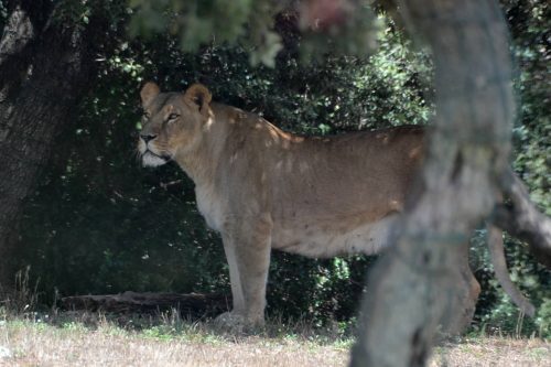 photographier un animal sauvage au zoo
