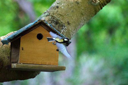 photographier un oiseau dans un arbre