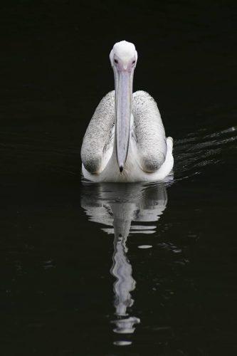 photographier un animal avec son reflet